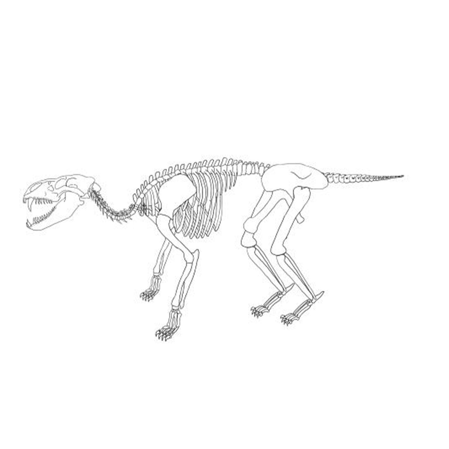 Creature Skeleton